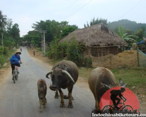Hoian Cycling To Hue -3 days